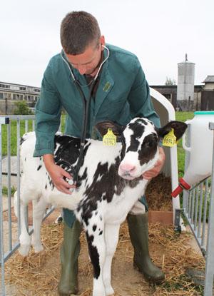 Bestandsbetreuung Rind