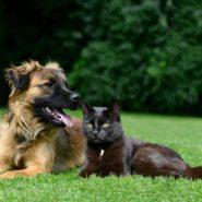 Arthrose bei Hunden und Katzen